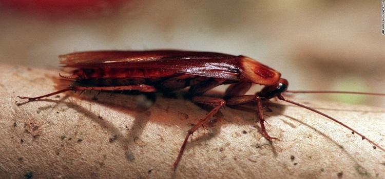 Cockroach Control Seven Hills